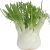 Fennel Each